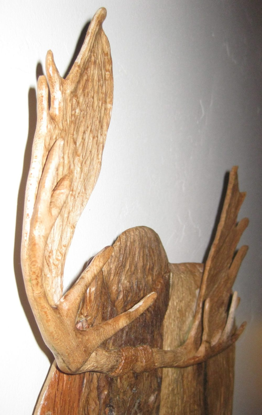 moose antlers carved of brids eye maple